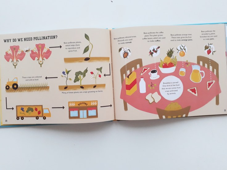 Pollination in The Bee Book by Charlotte Milner DK Books