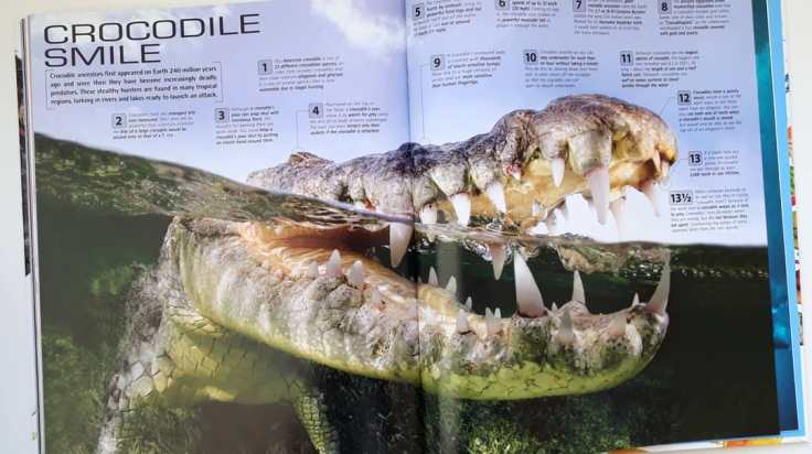 13 and a half Incredible Things You Need to Know About Everything DK Books childrens non fiction crocodile teeth