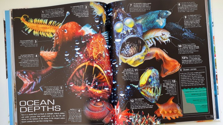 13 and a half Incredible Things You Need to Know About Everything DK Books childrens non fiction ocean creatures