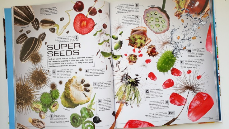 13 and a half Incredible Things You Need to Know About Everything DK Books childrens non fiction plants and seeds