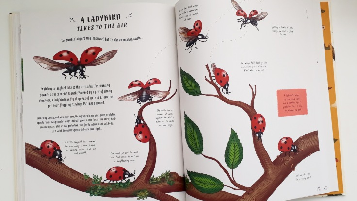 A ladybirds wings in Slow Down by Rachel Williams and Freya Harris Non fiction children's book mindfulness nature stories magic cat publishing