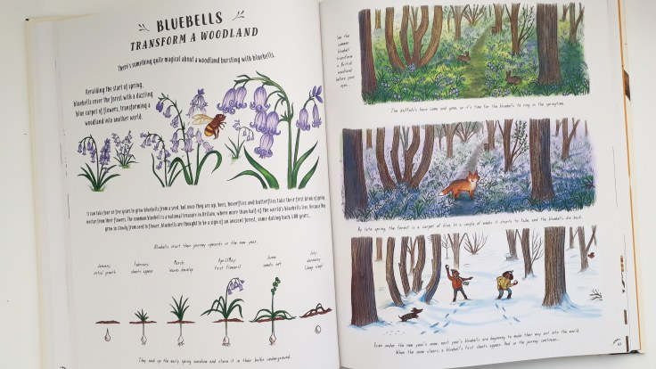 Bluebells in the woods Slow Down by Rachel Williams and Freya Harris Non fiction children's book mindfulness nature stories magic cat publishing